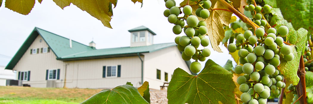 Our Tasting Room Through the Vines
